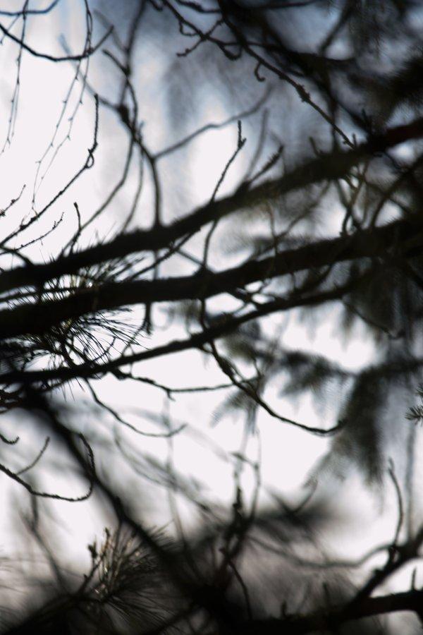 Havunneulaset, luonto