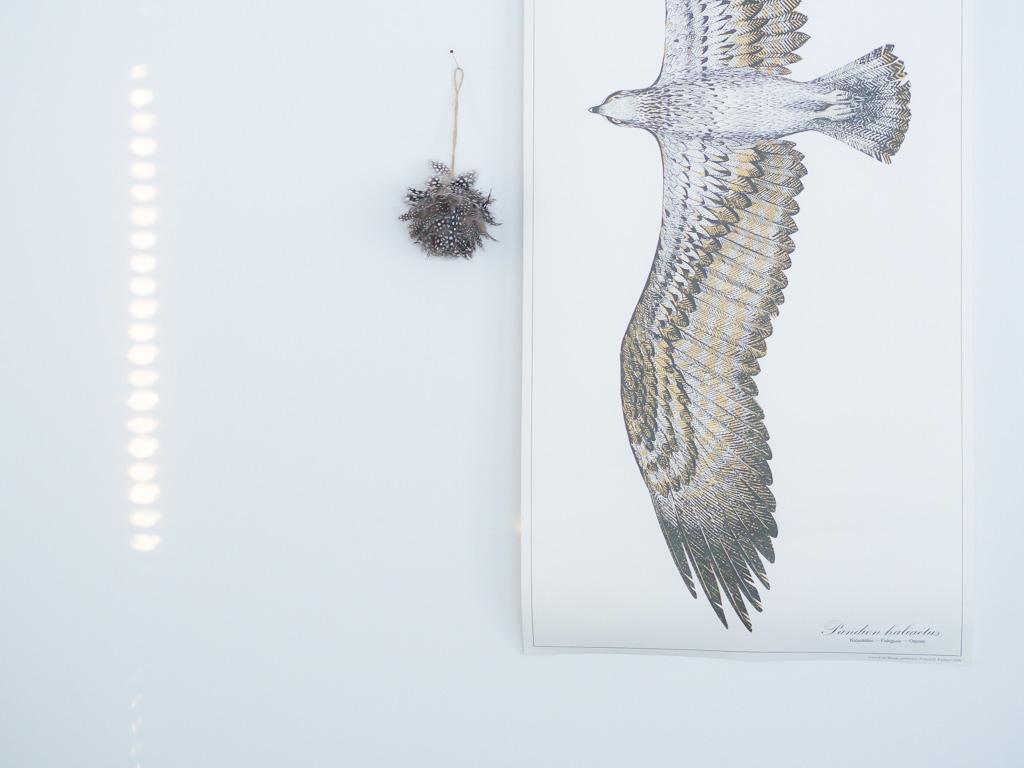 Valo, kalasääksi, Erik Bruun