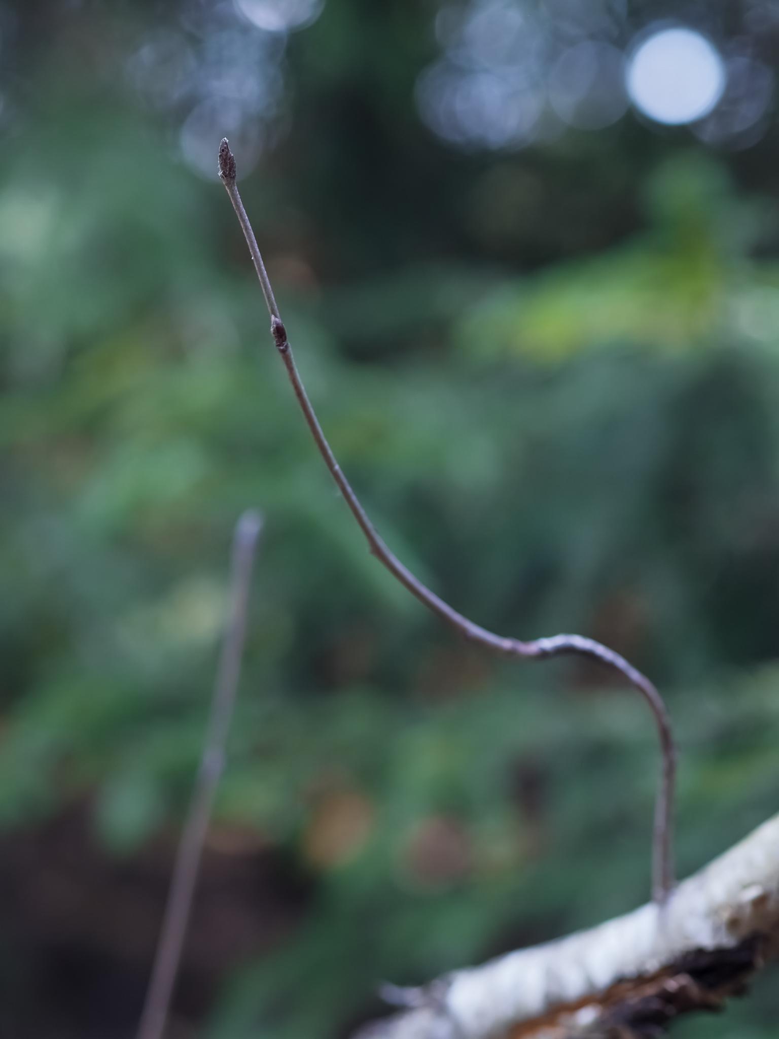 Myllypuron luontopolku, oksa